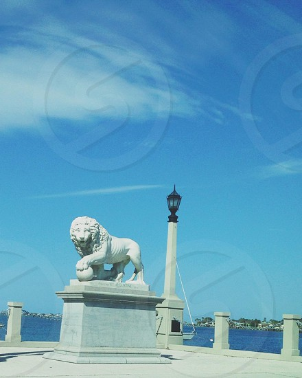 white lion statue  photo