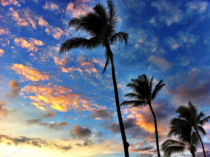 palm trees and orange clouds  photo
