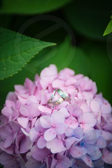 rings marriage matrimony bouquet flowers plant detail wedding bride groom purple green diamond gold platinum silver photo