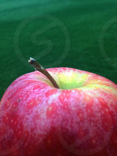 red apple with stem photo