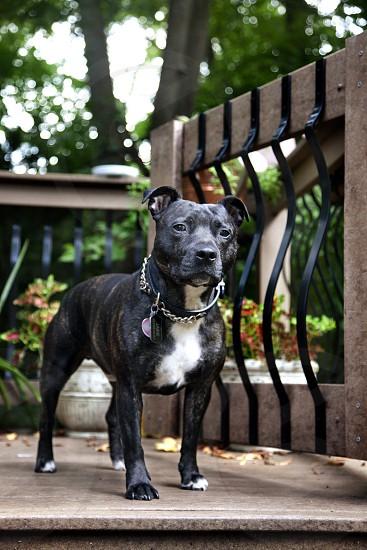 Dog Summer Warm photo