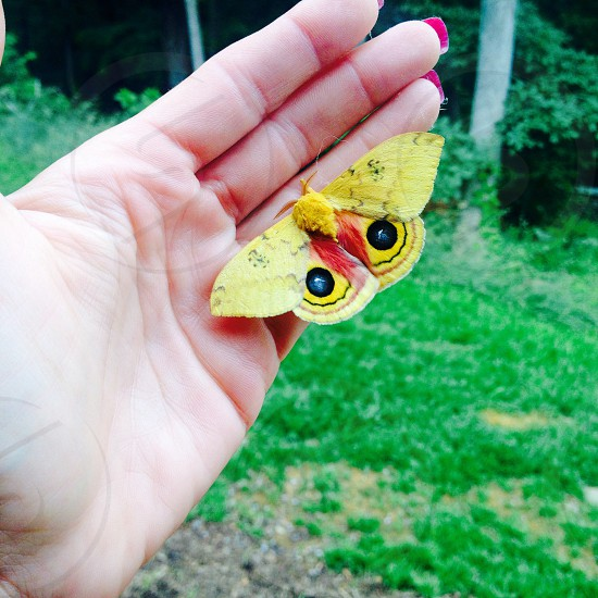 yellow butterfly on woman's hand photo