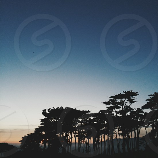 San Francisco Sunsets Trees Pacific Ocean SF Lands End photo