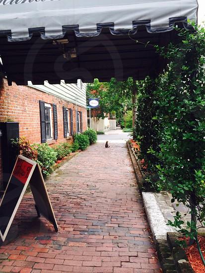 Downtown Savannah.  photo