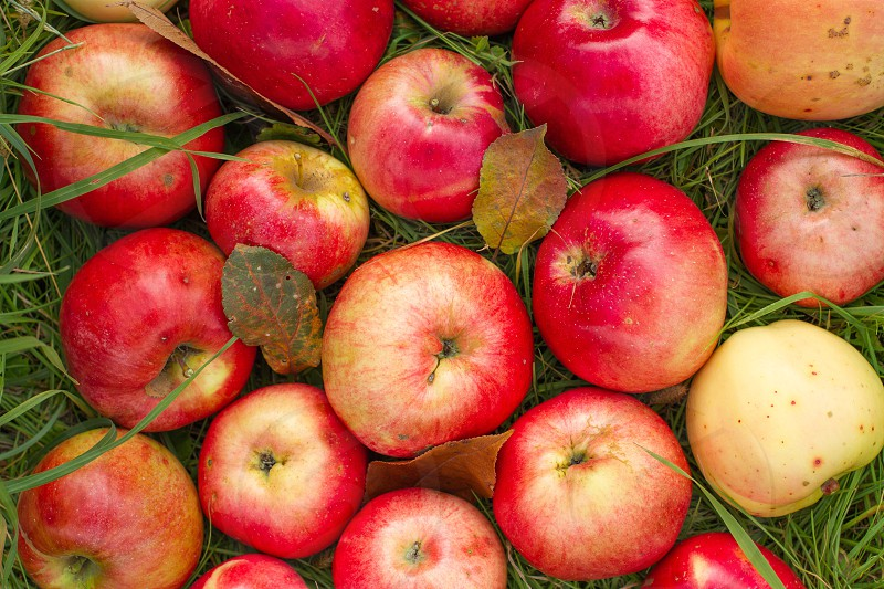 Red apples close up photo