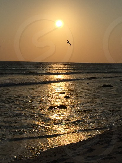Sunset beach water ocean sea birds waves dusk silhouette  photo