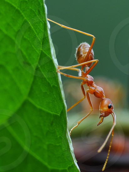 Ants in action                               photo