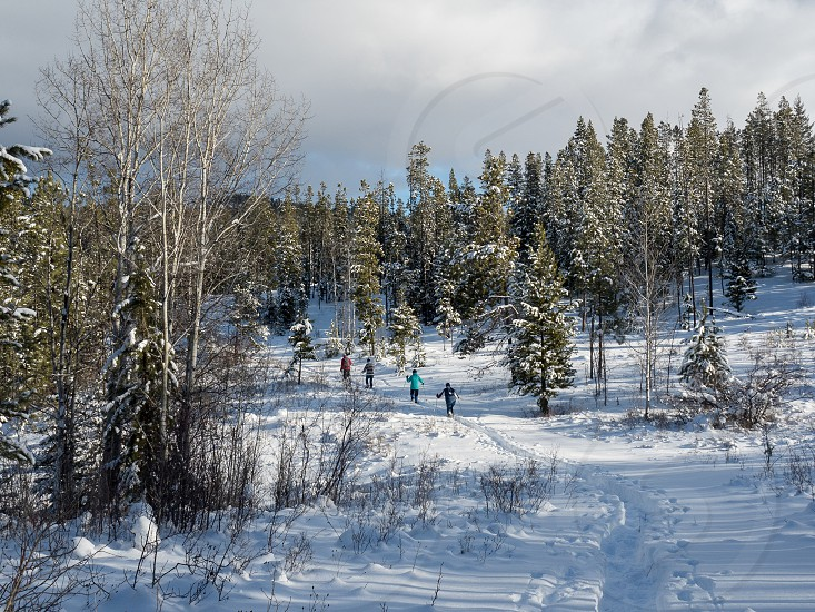 Snowshoeing in the Kane Valley outside Merritt BC Canada photo
