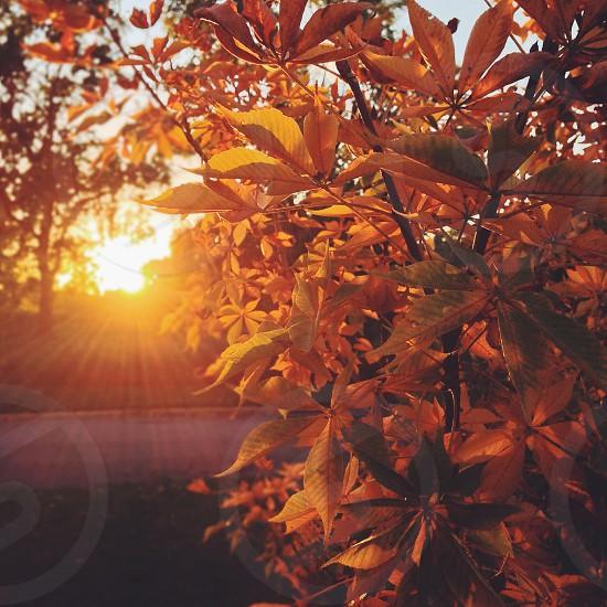Chasing Autumn  photo