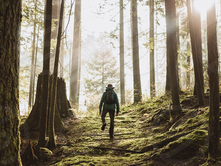 Hiking in the forest with god rays photo