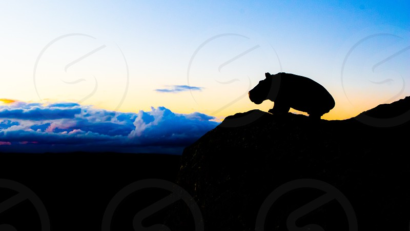 The silhouette of a hippopotamus can be seen on a rocky hill against a sunset sky at dusk. This is Canada though and the hippo is a toy. photo