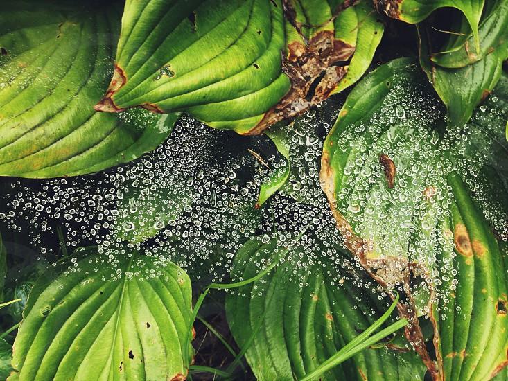 water dew photo