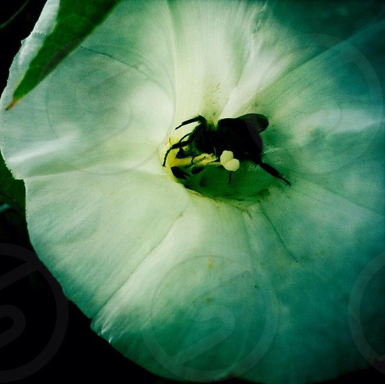 top view photography of honey bee on white petaled flower photo