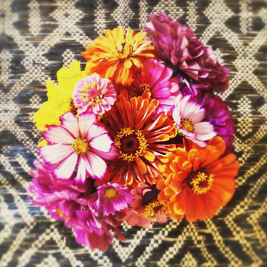 multicolored flowers photo