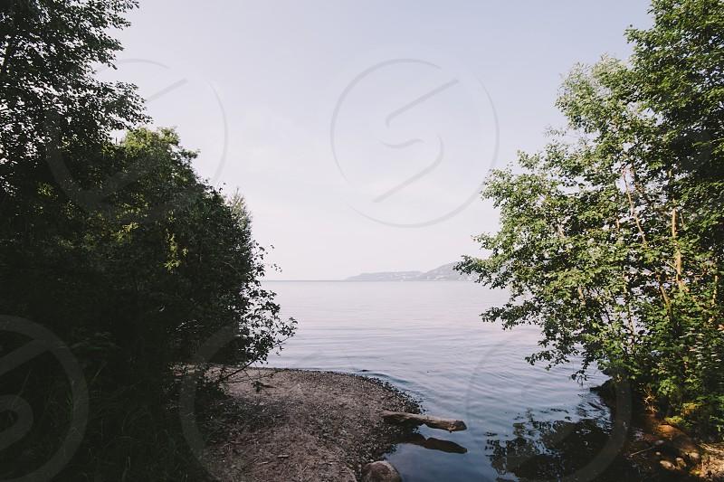 trees lake photo