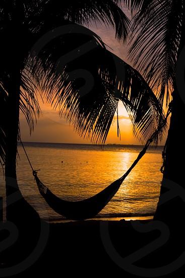 Sunset hammock palm trees island ocean Belize photo