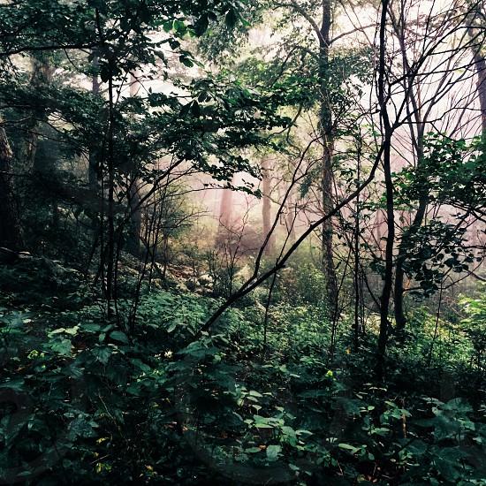 Foggy green.  photo