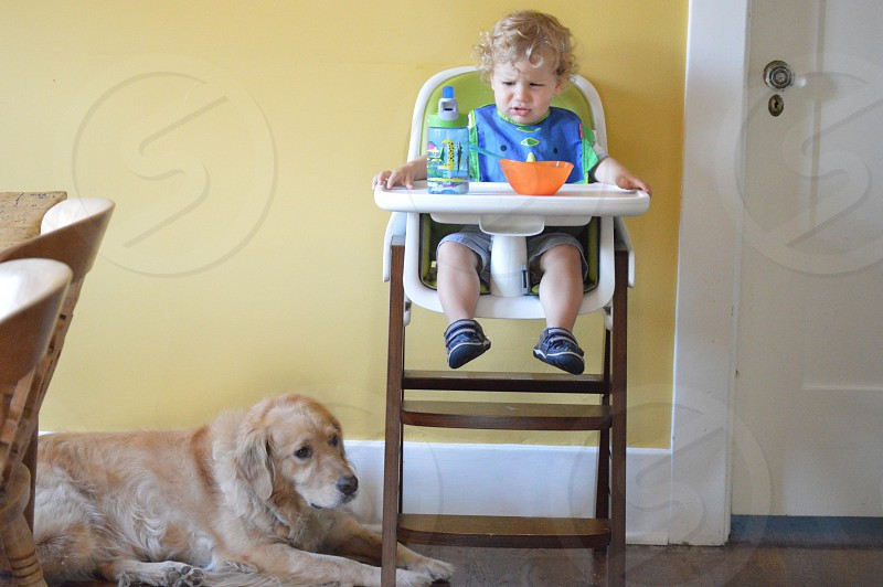 toddler in blue shirt sitting on high chair with adult golden retriever on side photo