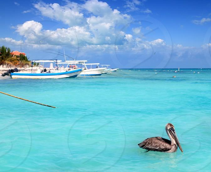 Puerto Morelos beach Mayan riviera Caribbean sea pelican bird photo
