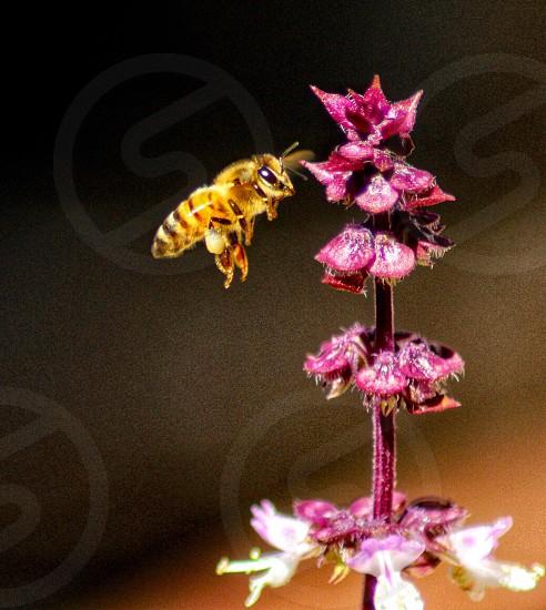 Honey bee flower bloom garden pollen pollination pollen sack photo