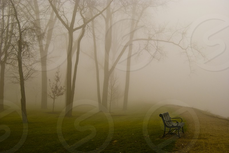 Empty bench on a foggy morning. photo