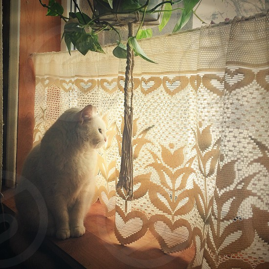 Cats animals winter estonia lovely beautiful white cat cute animal photo