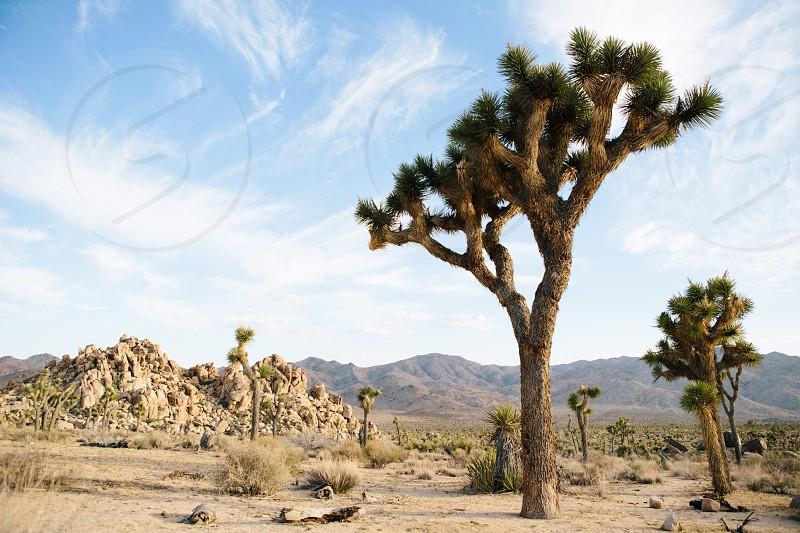 Joshua Tree travel California  photo