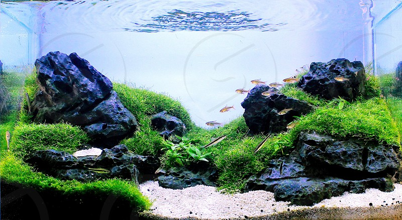 JoshScape Aquarium Aquascape Nature Aquarium Aquascaping. photo