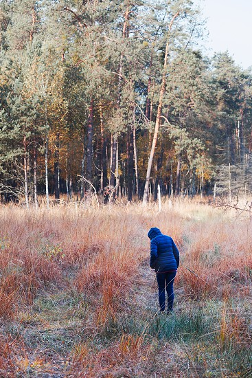 Woman walking through a meadow toward a forest. Forest in autumn season. Colorful foliage on trees lit by morning sunlight. Natural nature forest landscape in autumn warm sunlight day photo