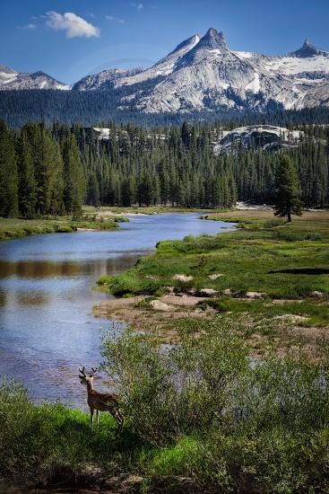 Tuolumne Meadows Yosemite National Park photo