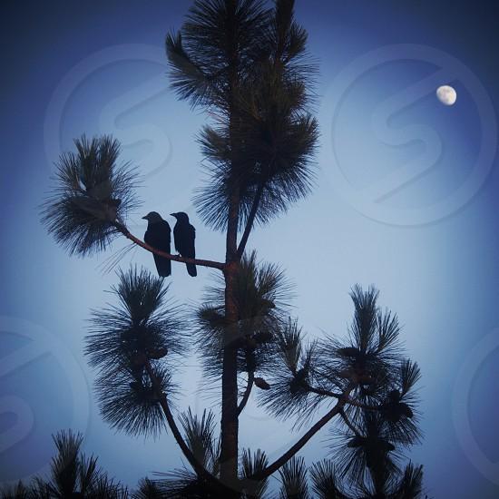 brown birds photo