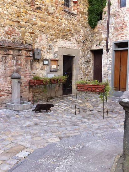 Black cat walking in a Tuscan medieval village photo