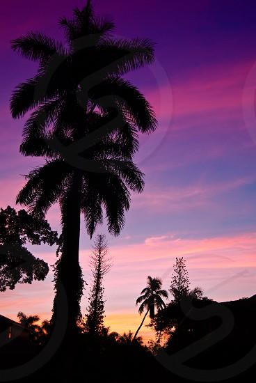 Palm tree silhouettes at sunrise. photo