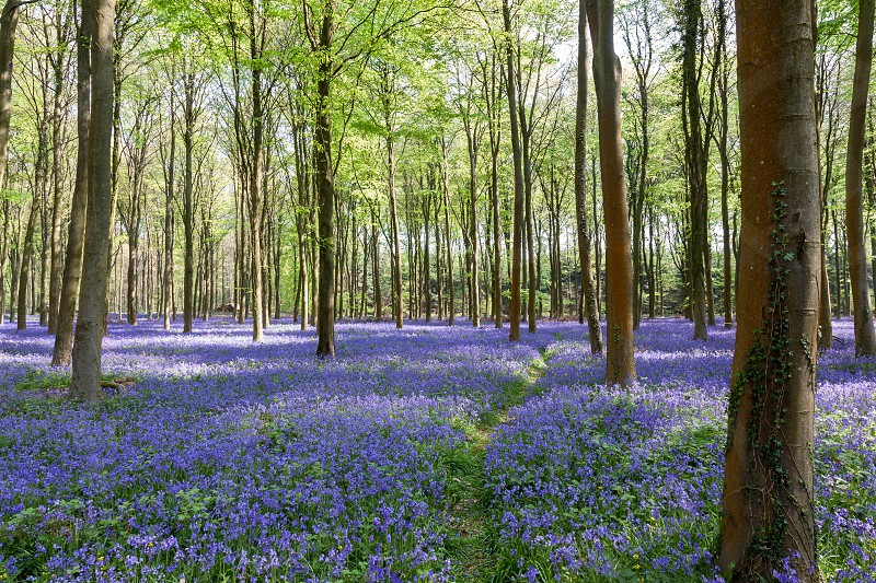 Glorious spring day in Wepham Woods photo