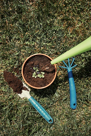 Replanting plant into a new pot. Watering planted plant. Using tools rake and shovel. Real people authentic situations photo