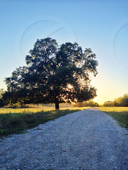 gray gravel road with lonely tree photo