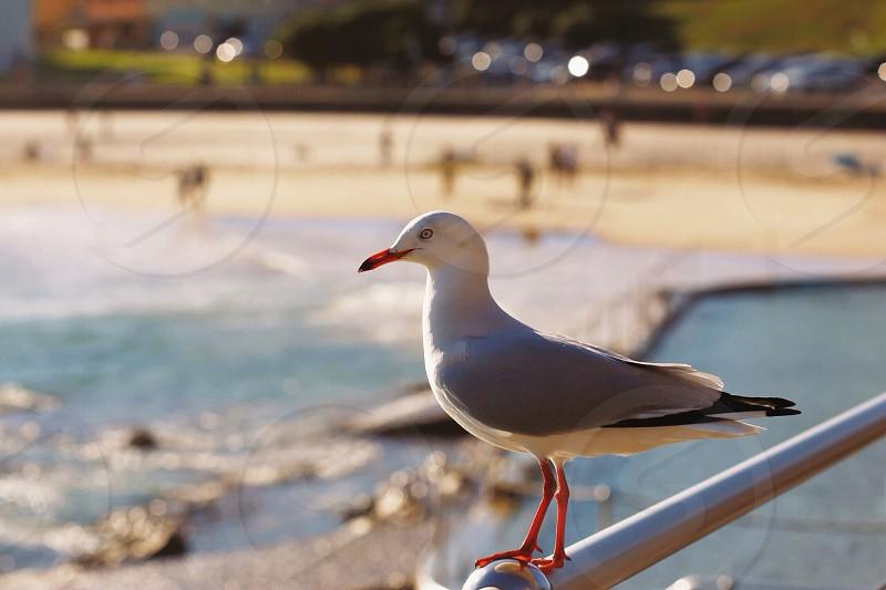 white and black dove on silver handrails photo