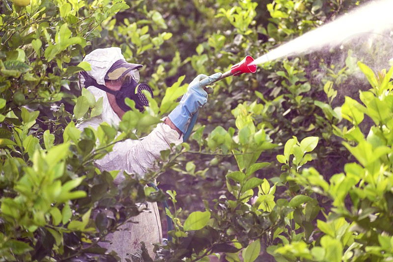 Weed insecticide fumigation. Industrial chemical agriculture. Toxic pesticides pesticide on fruit lemon in growing agricultural plantation spain. Man spraying or fumigating pesti pest control 2019 photo