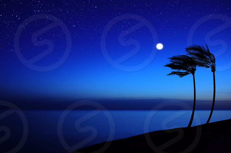 silhouette photography of 2 palm tree hit by air near a body of water under clear blue sky during nigh time photo