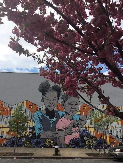 pink flowering tree on the sidewalk photo