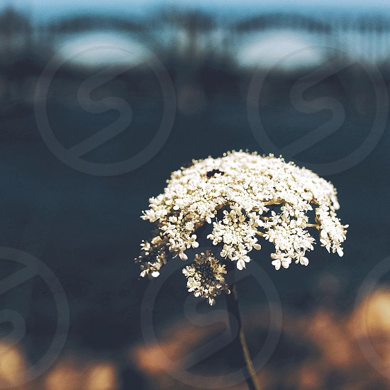 Waterside floral beaut photo