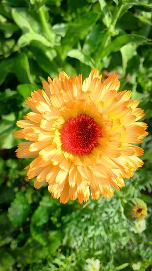 Floweryellowspring photo