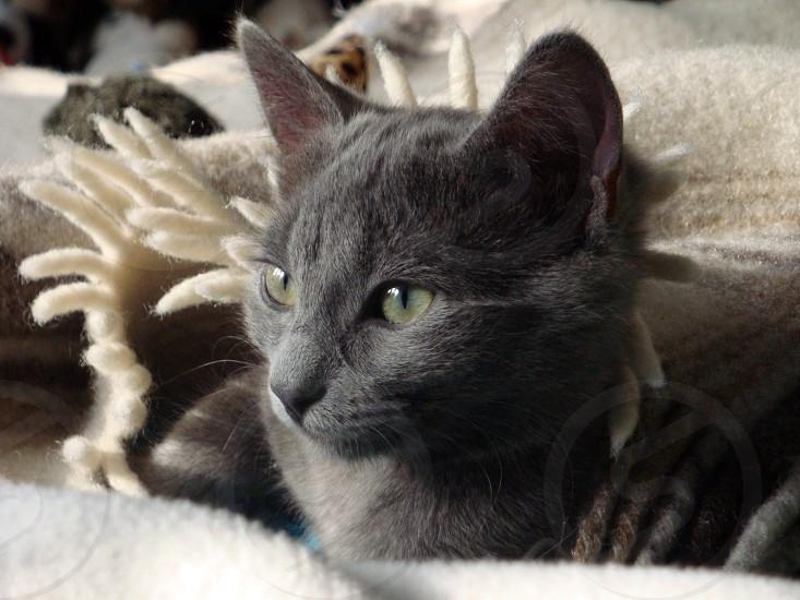 Green Eyed Grey photo