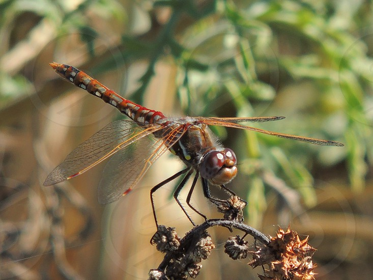 Dragonfly up close  photo