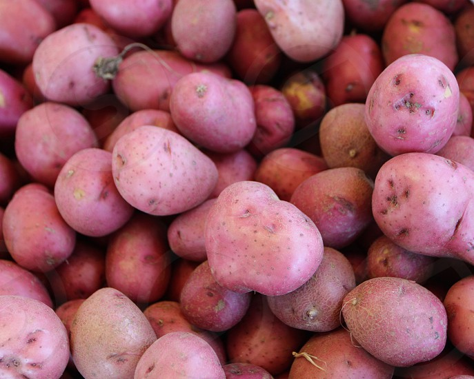 Red skin potatoes at farmers market photo