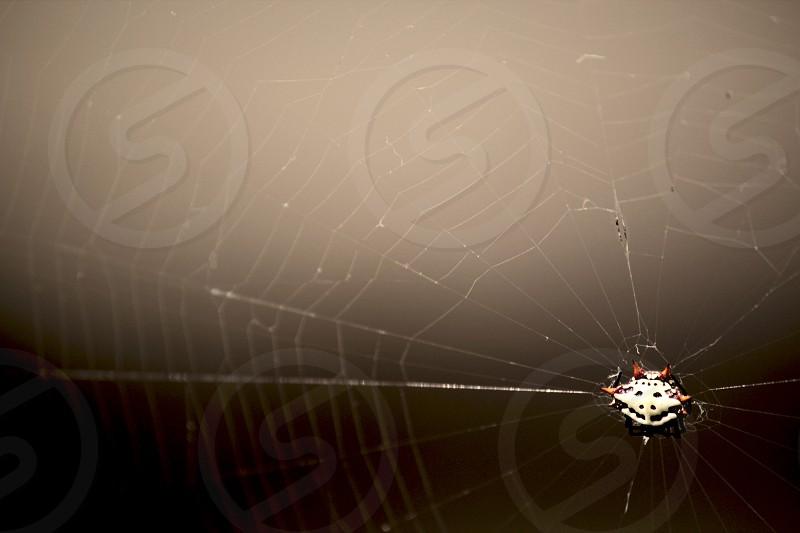 web spider close arachnid shell color orange white black photo