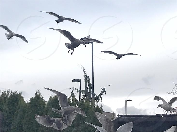 Birds flying low. photo