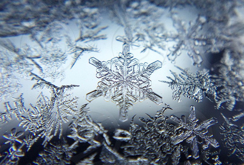 close up of snowflakes photo