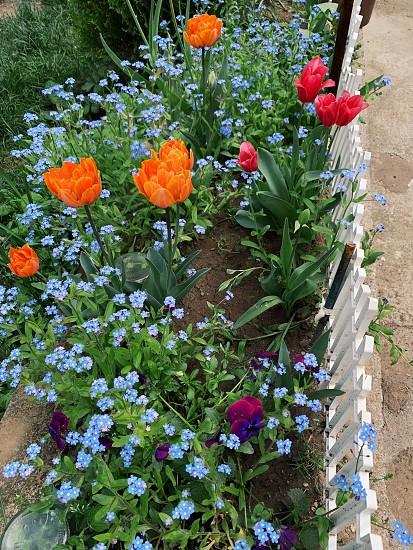 Flowers blossom spring photo