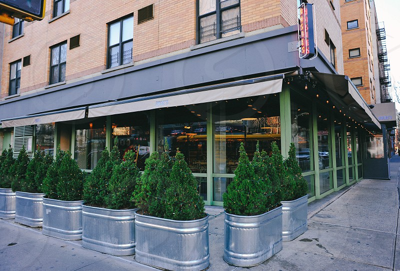 green trees in a galvanized buckets outside of a glass window restaurant building photo